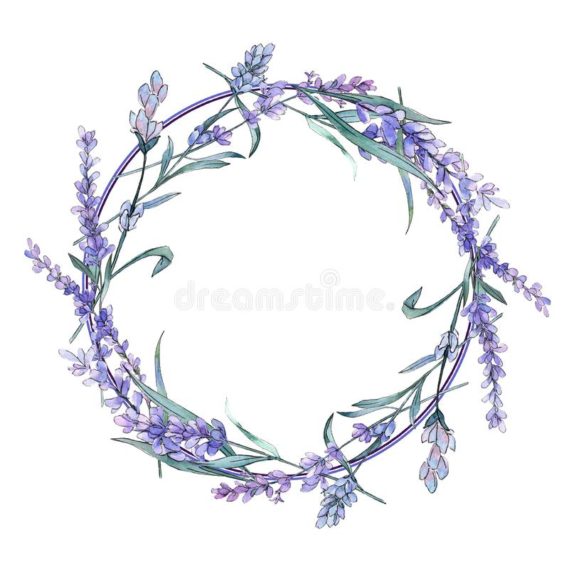 Lavanda porpora Fiore botanico floreale Wildflower selvatico della foglia della molla Quadrato dell'ornamento del confine della p illustrazione di stock