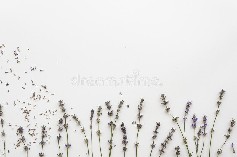 Lavanda secada aislada en el fondo blanco maqueta del fondo de la plantilla de la lavanda imagenes de archivo