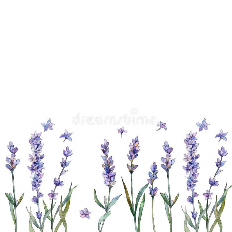Lavanda viola Fiore botanico floreale Quadrato dell'ornamento del confine della pagina illustrazione vettoriale