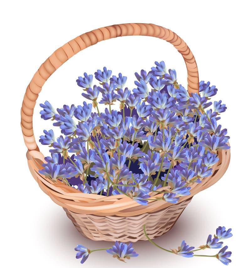 Lavande dans un vecteur de panier Beau décor réaliste de fleurs Composition naturelle fraîche Provence en été de printemps illustration stock