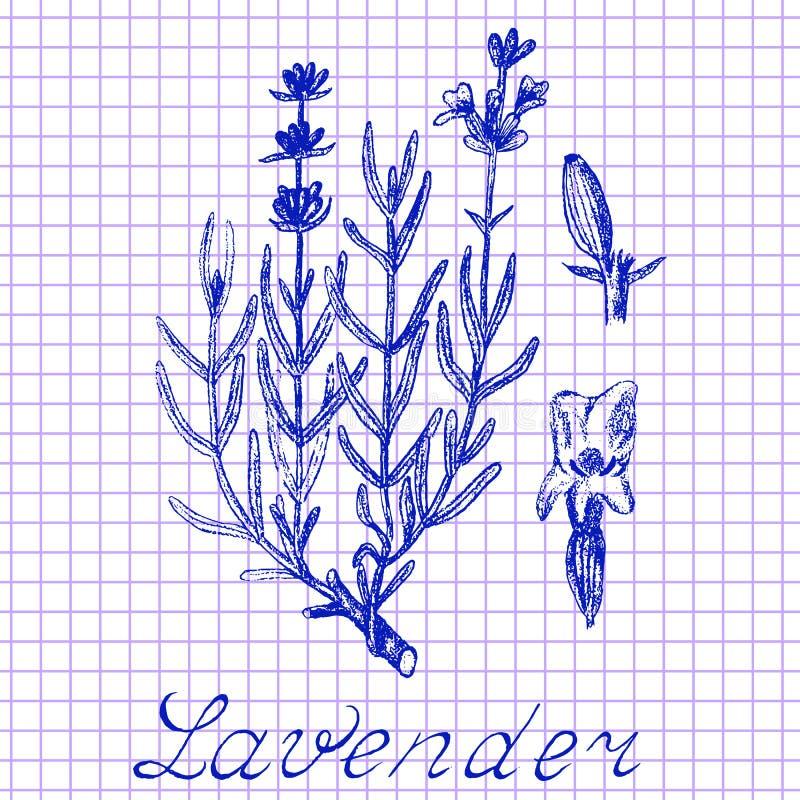 Lavande Dessin botanique sur le fond de livre d'exercice illustration stock