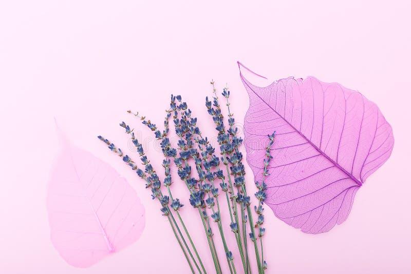 Lavande et feuilles sèches de rose sur un fond rose Configuration plate image libre de droits