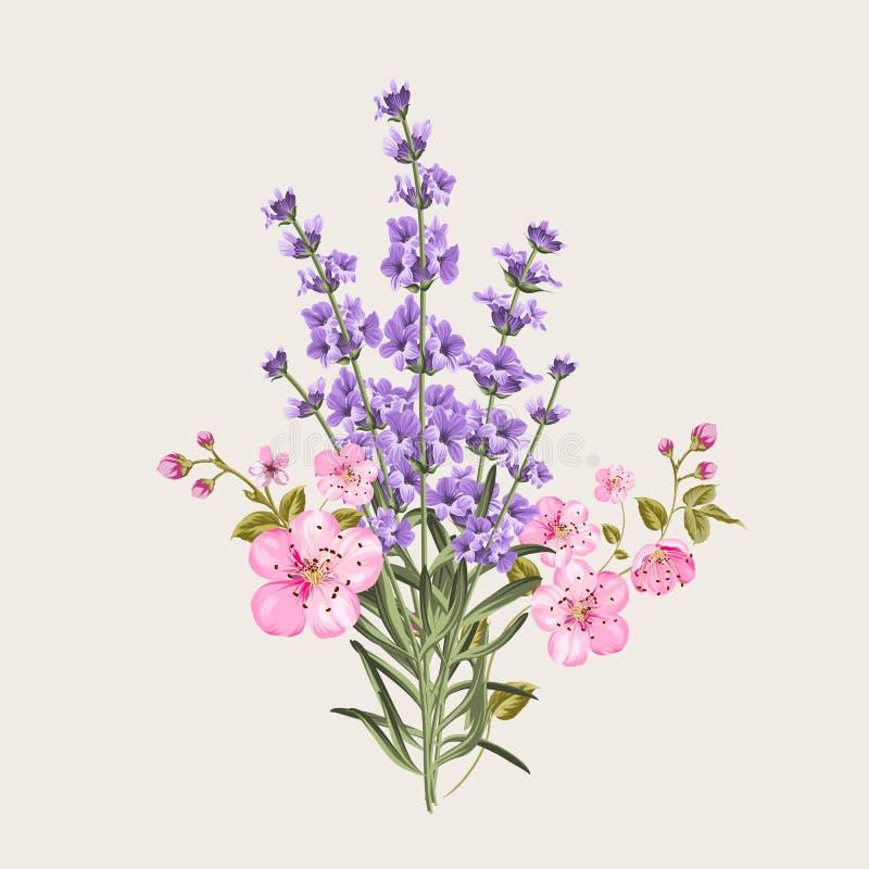 Lavande et fleurs de Sakura illustration stock