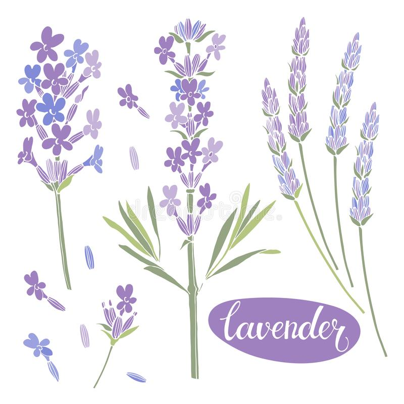 Lavande Illustration d'aquarelle, éléments floraux d'isolement pour la conception Collection de fleurs de lavande sur le fond bla illustration stock