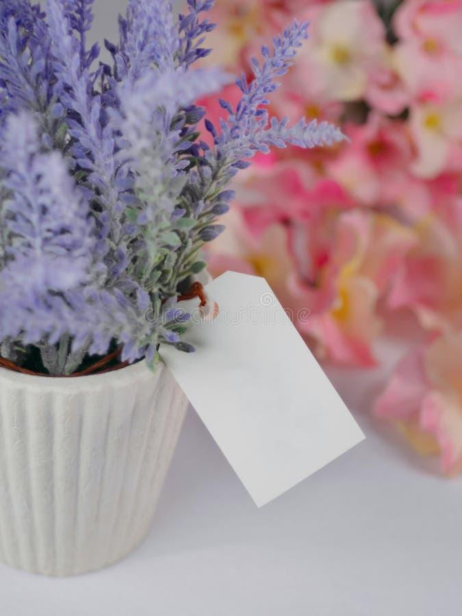 Lavande pourpre dans des pots blancs, avec l'ensemble vide de papier d'?tiquette sur un fond blanc et des fleurs troubles images libres de droits