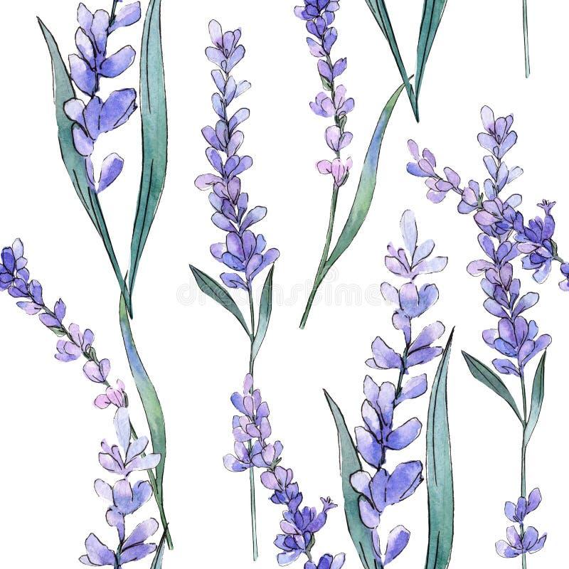 Lavande pourpre Fleur botanique florale Ensemble d'illustration de fond d'aquarelle Modèle sans couture de fond illustration libre de droits