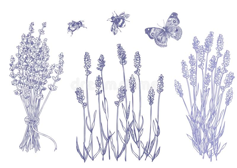 Lavande réglée avec des abeilles illustration de vecteur