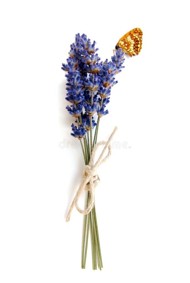 Lavander e farfalla fotografie stock