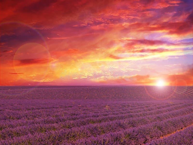 Lavander fält med att förbluffa solnedgång arkivbild