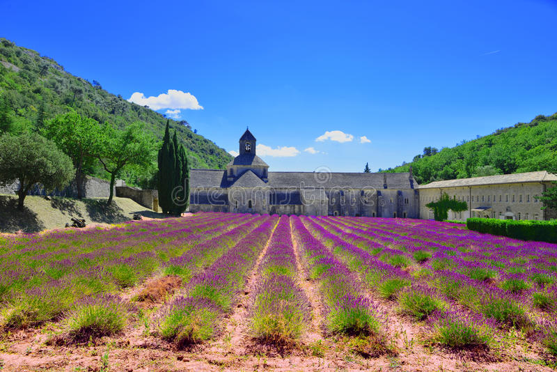 Lavander field. Senanque Abey royalty free stock photo