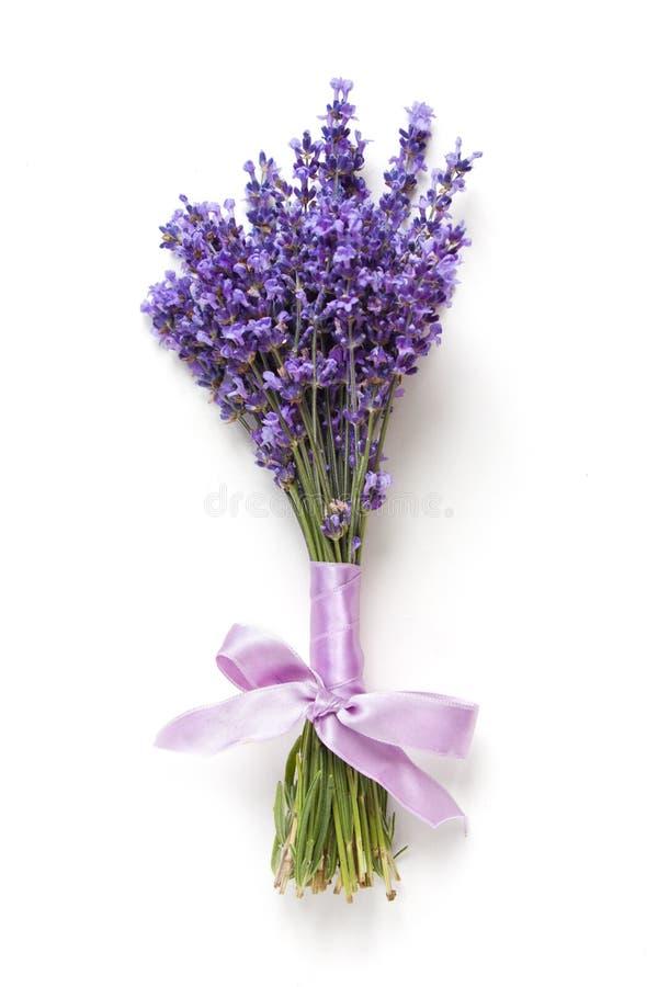 Lavander fleurit le bouquet sur le fond blanc images stock