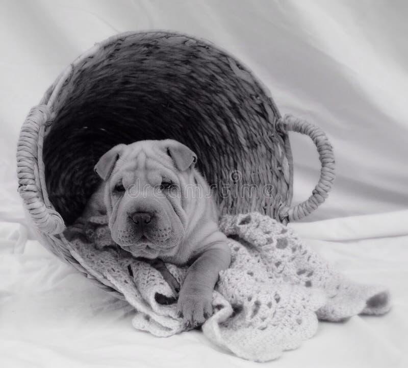 Lavanderia del cucciolo immagine stock libera da diritti