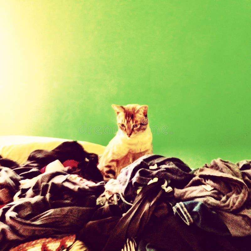 Lavanderia do gato imagens de stock royalty free
