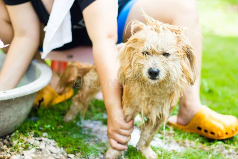 Lavando o cão fotografia de stock