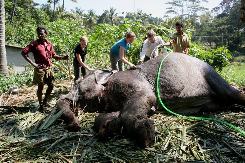 Lavando um elefante foto de stock