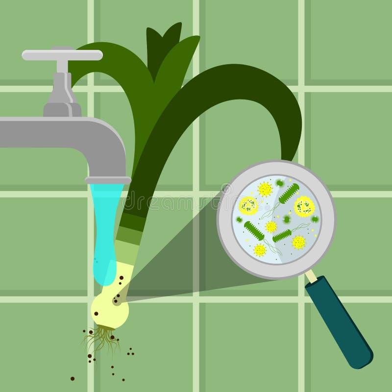 Lavare porro contaminato illustrazione vettoriale