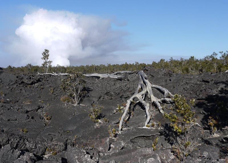Lavaskulptur i Hawaii arkivbild
