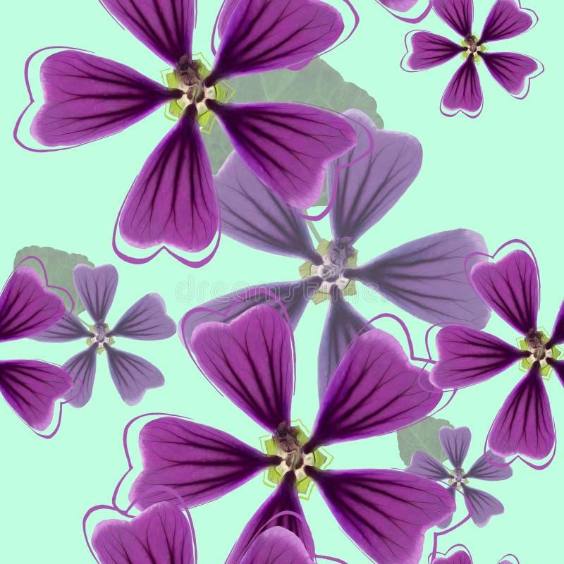 Lavatera, malva, malva Textura sem emenda do teste padrão das flores Fl ilustração stock