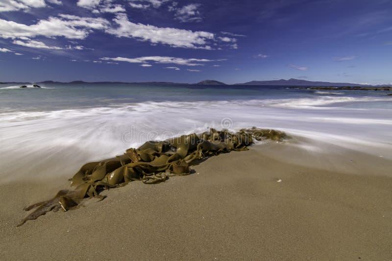 Lavato su alga su una spiaggia fotografia stock libera da diritti