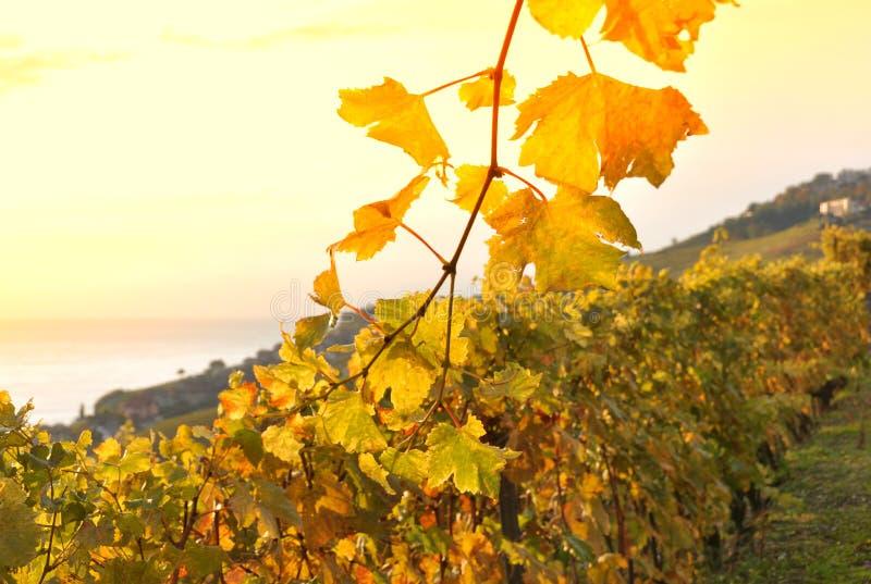 Lavaux Region, Switzerland Royalty Free Stock Photo