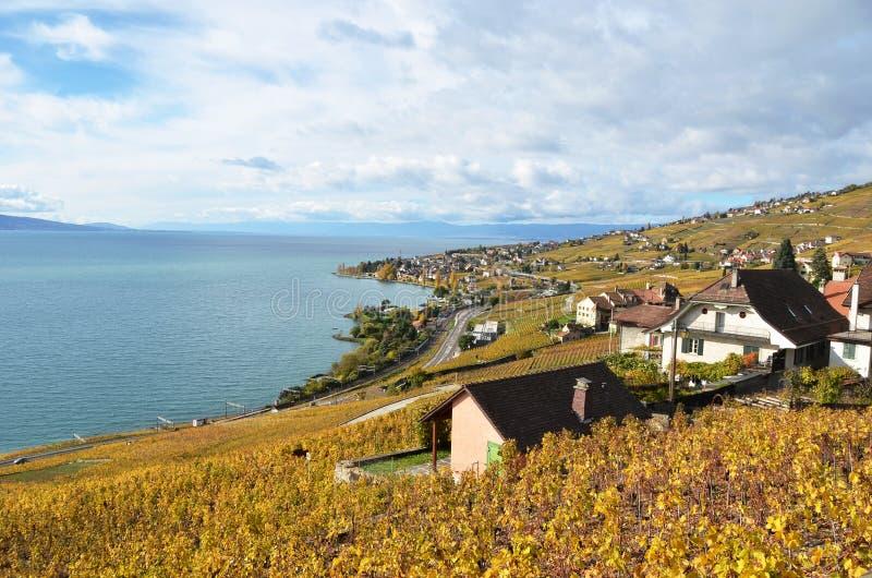 Download Lavaux region, Switzerland stock photo. Image of ripe - 39512926