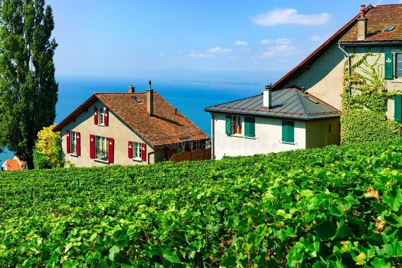 Lavaux, Switzerland - August 30, 2016: Chalets on Vineyard Terrace hiking trail of Lavaux, Lake Geneva and Swiss mountains, Lavaux. Oron district, Switzerland royalty free stock image