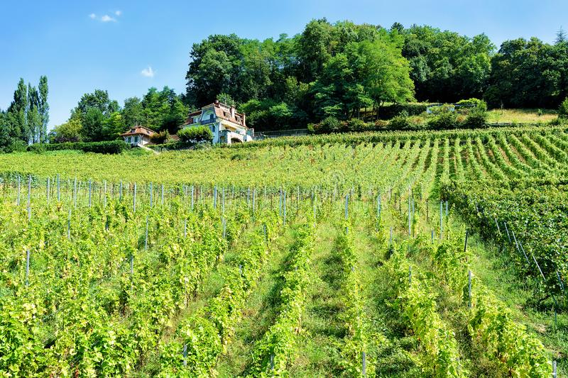 Chalets at Lavaux Vineyard Terraces hiking trail Lavaux Oron Switzerland. Lavaux, Switzerland - August 30, 2016: Chalets at Lavaux Vineyard Terraces hiking trail royalty free stock photos