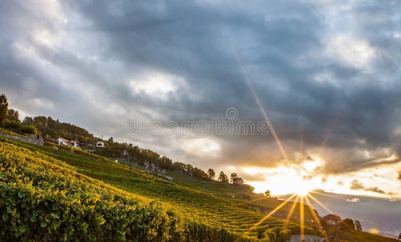 Lavaux, Switzerland - nascer do sol dos terraços do vinhedo mim imagens de stock