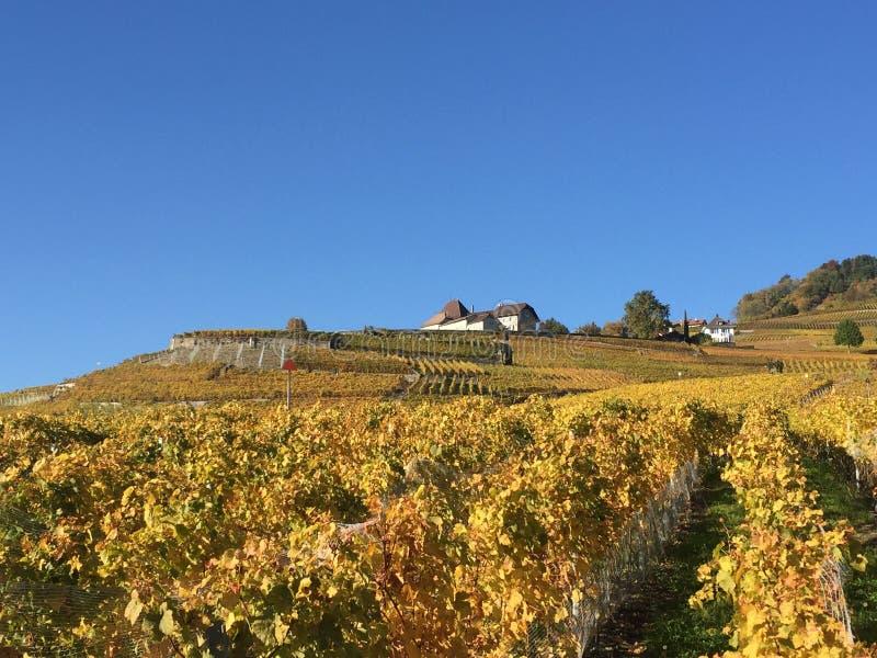 Lavaux, Unesco, vigne, Vilette, Svizzera fotografia stock