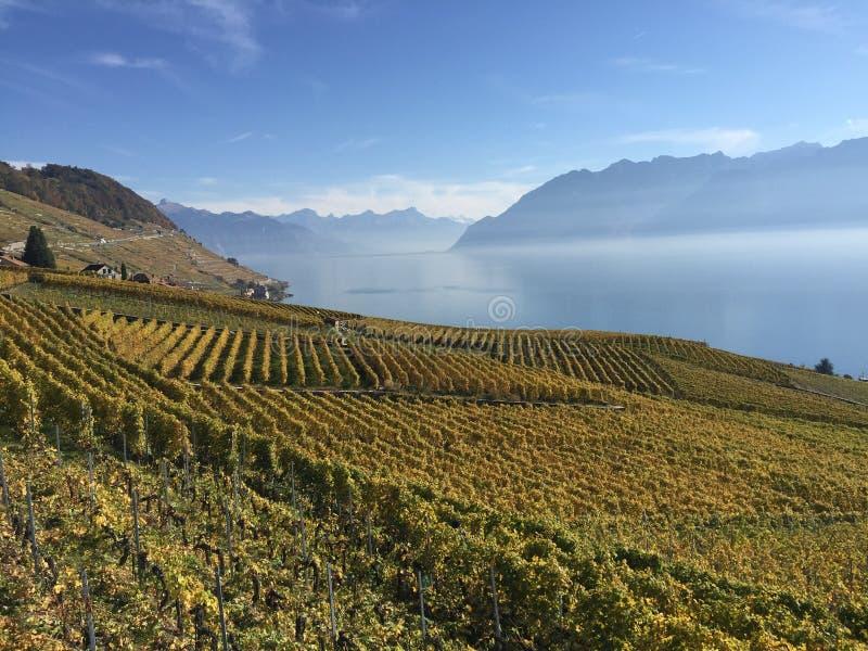 Lavaux, UNESCO, Weinberge, Epesses, die Schweiz stockbilder