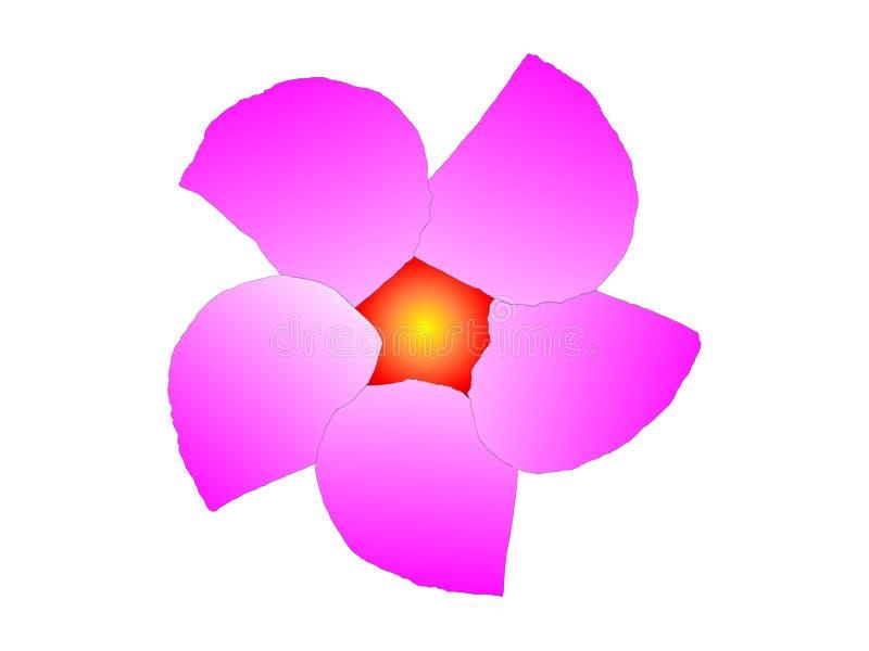lavendar blomma vektor illustrationer