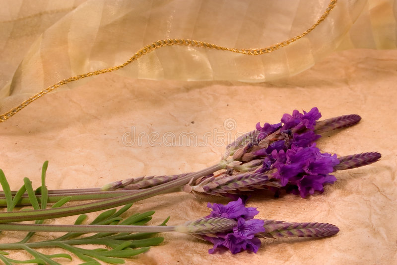 Lavendar And Lace Royalty Free Stock Images