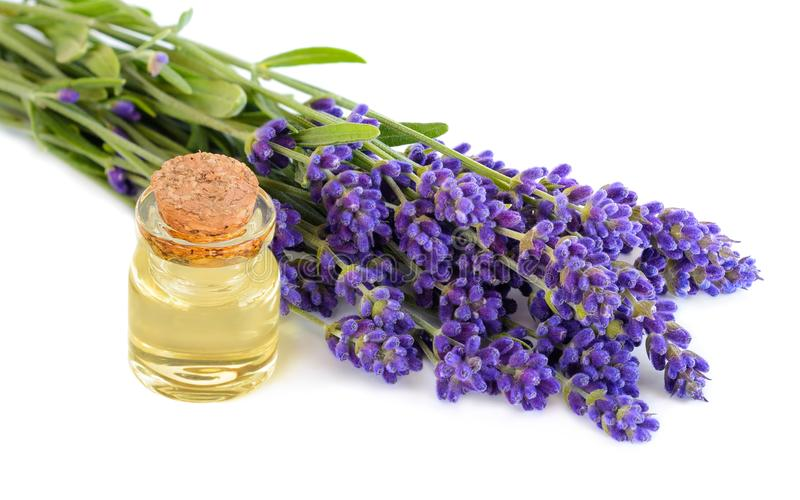 Lavendelöl in der transparenten Glasflasche mit Lavendel blüht auf einem weißen Hintergrund stockfotografie