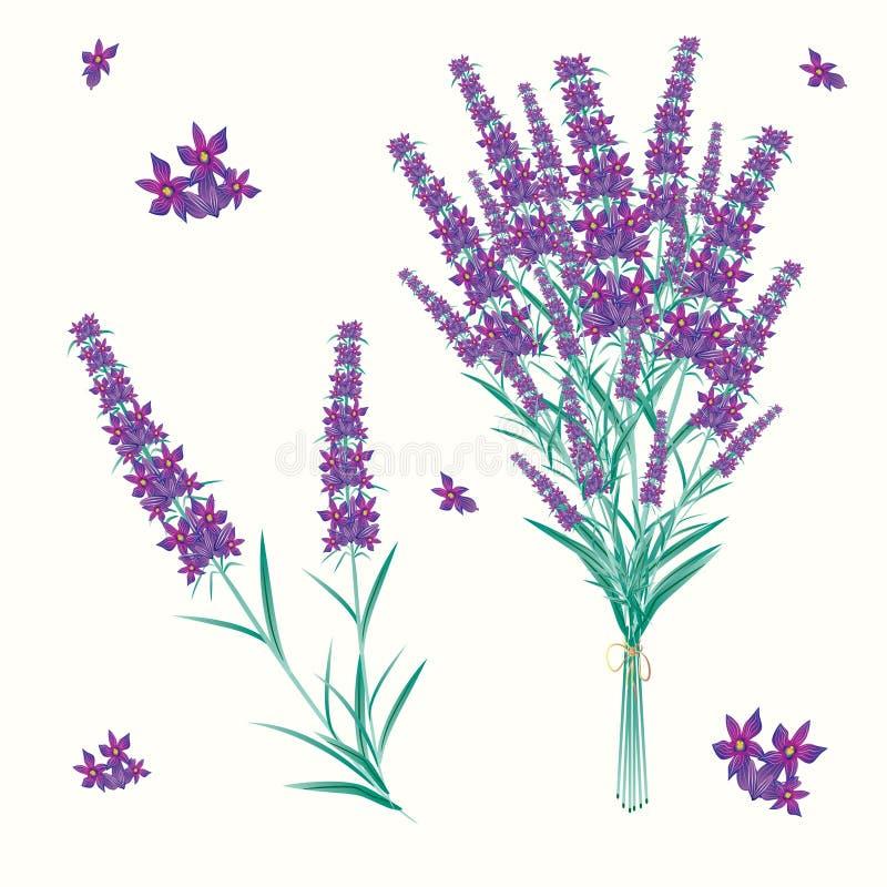 lavendel royaltyfri illustrationer
