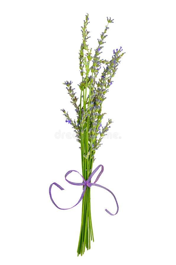 Lavendel royaltyfri foto