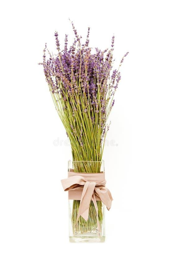 Lavendel arkivbilder