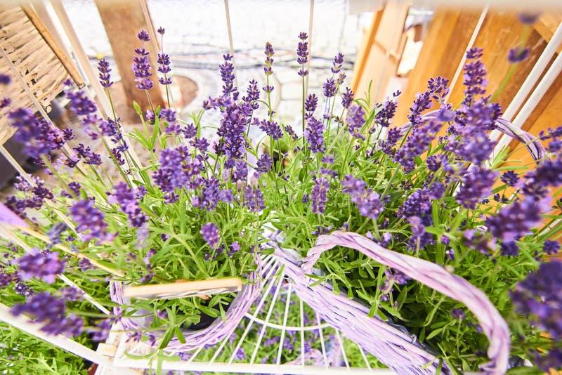 Lavendel basquet in macro royalty-vrije stock fotografie