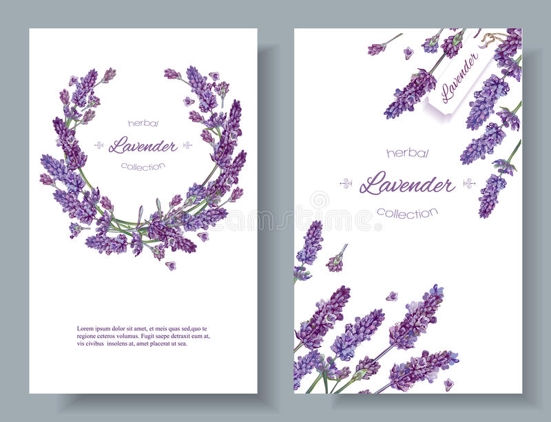 Lavendel blommar baner royaltyfri illustrationer