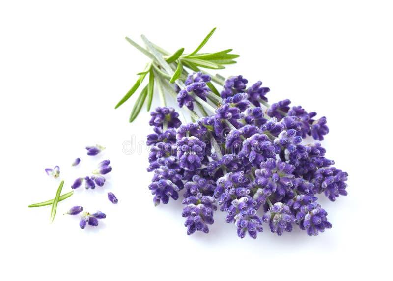 Lavendel blommar i closeup arkivfoto