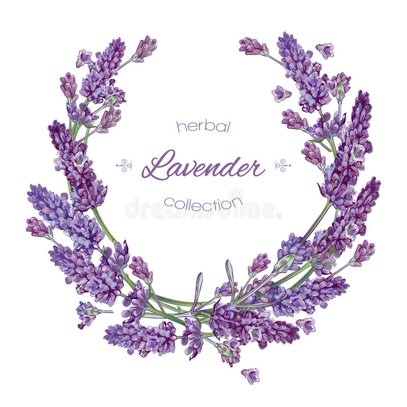 Lavendel blommar kransen stock illustrationer