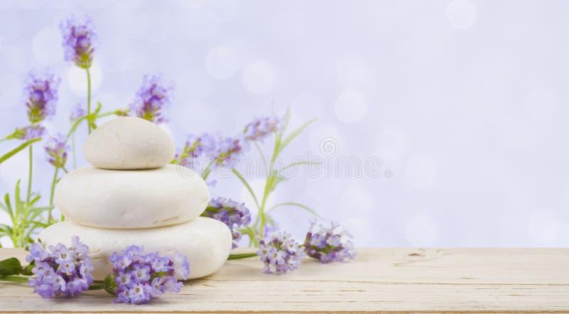 Lavendel blommar och stenar på trä över abstrakt lila bakgrund arkivbilder