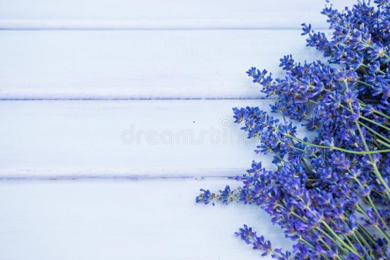 Lavendel blommar på den blåa wood bakgrunden arkivfoto