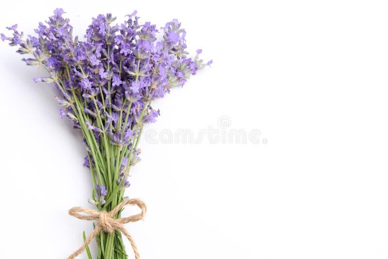 Lavendel blommar på vit bakgrund arkivfoto
