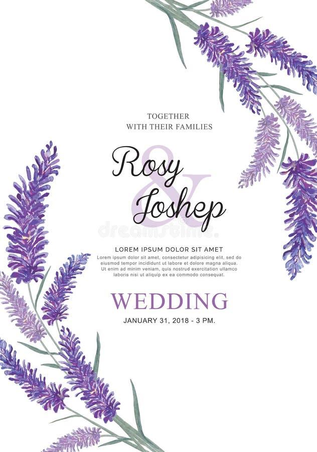 Lavendel blommar vattenfärgbeståndsdelar Samling av blom- och sidor på en vit bakgrund royaltyfri illustrationer