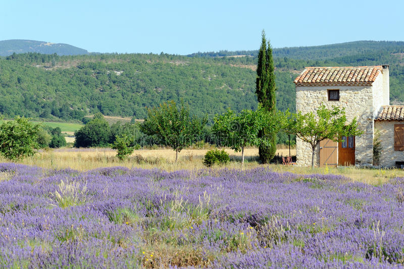 Lavendel in de Provence (Frankrijk) stock foto