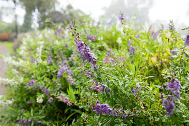 Lavendel en lilac tuin royalty-vrije stock foto