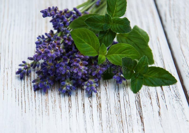 Lavendel en munt stock afbeeldingen