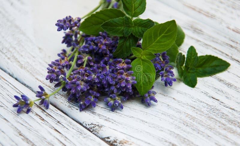 Lavendel en munt stock afbeelding