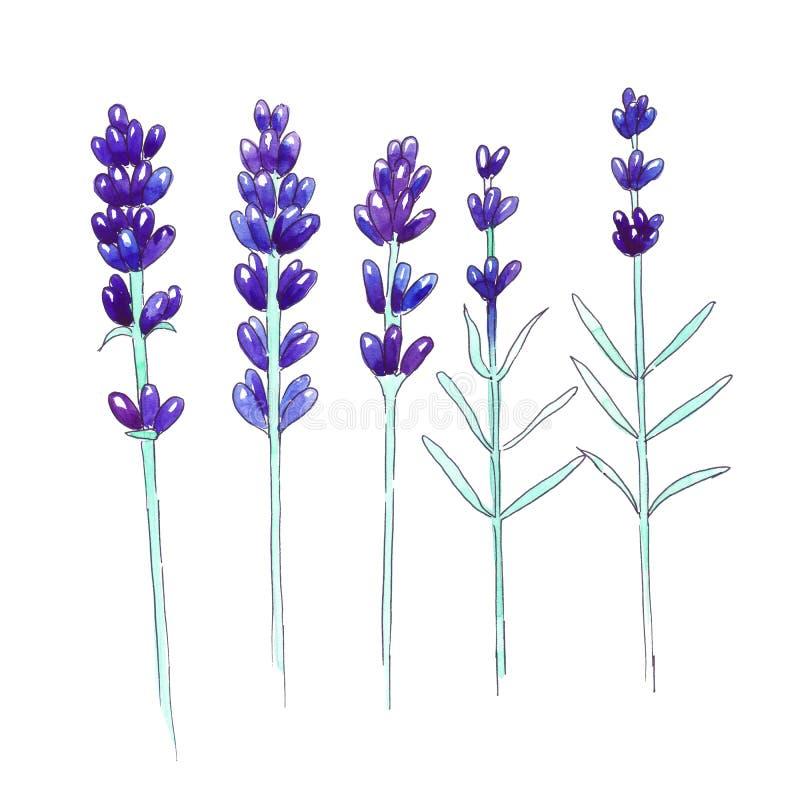 Lavendel för handteckningsvattenfärg Abstrakt blom- bakgrund stock illustrationer
