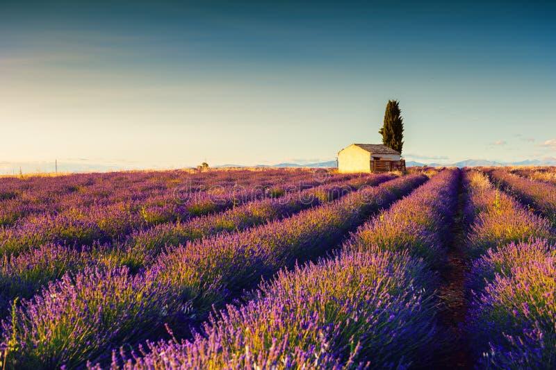 Lavendel f?ngt Landschaft in Provence, Frankreich auf stockfotografie